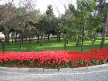 istanbul-Atilla-Nilgun (48)